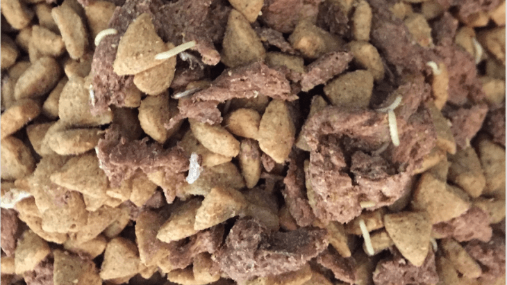 Worms In Cat Food Bowl