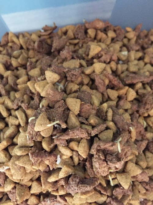 Common Bugs In Dog Food - What To Do? - Kohepets Blog | 500 x 667 jpeg 69kB