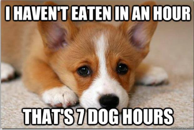 greedy pup meme