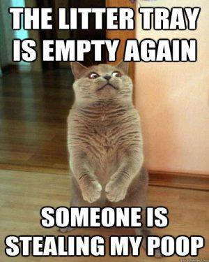 Cat litter poop