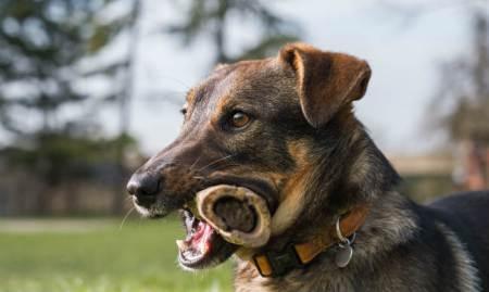 Dogs Love Bones!