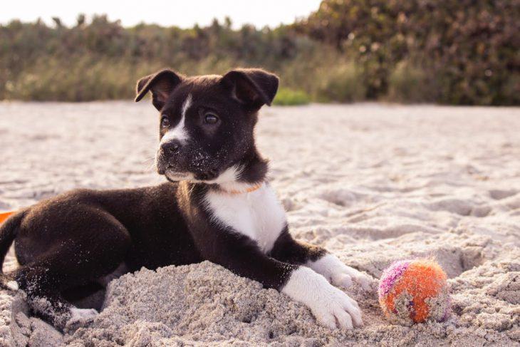 Best Types Of Dog Toys
