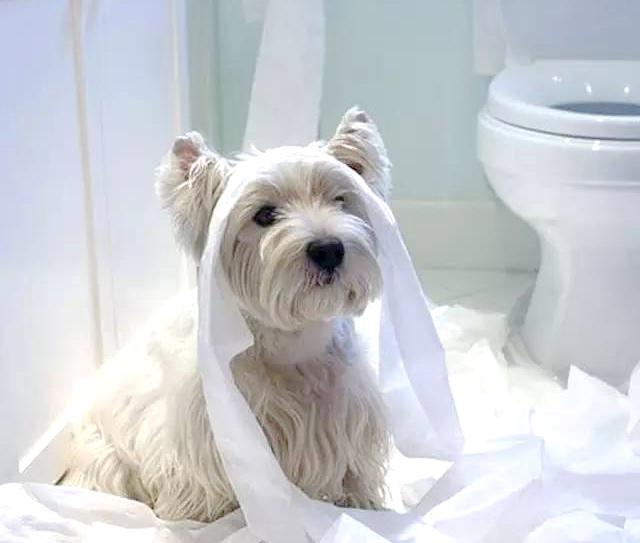 Toilet Training Your Dog