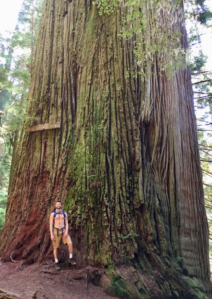 Redwoods National Forest, N California : Photos courtesy of Knox Peake