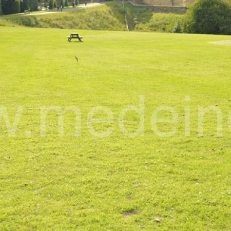 Sodo praktika: Kurti natūralią žolę - veją, kurios nereikia pjauti | , veja kurios nereikia pjauti