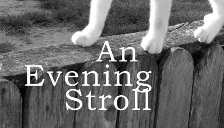 fic: an evening stroll