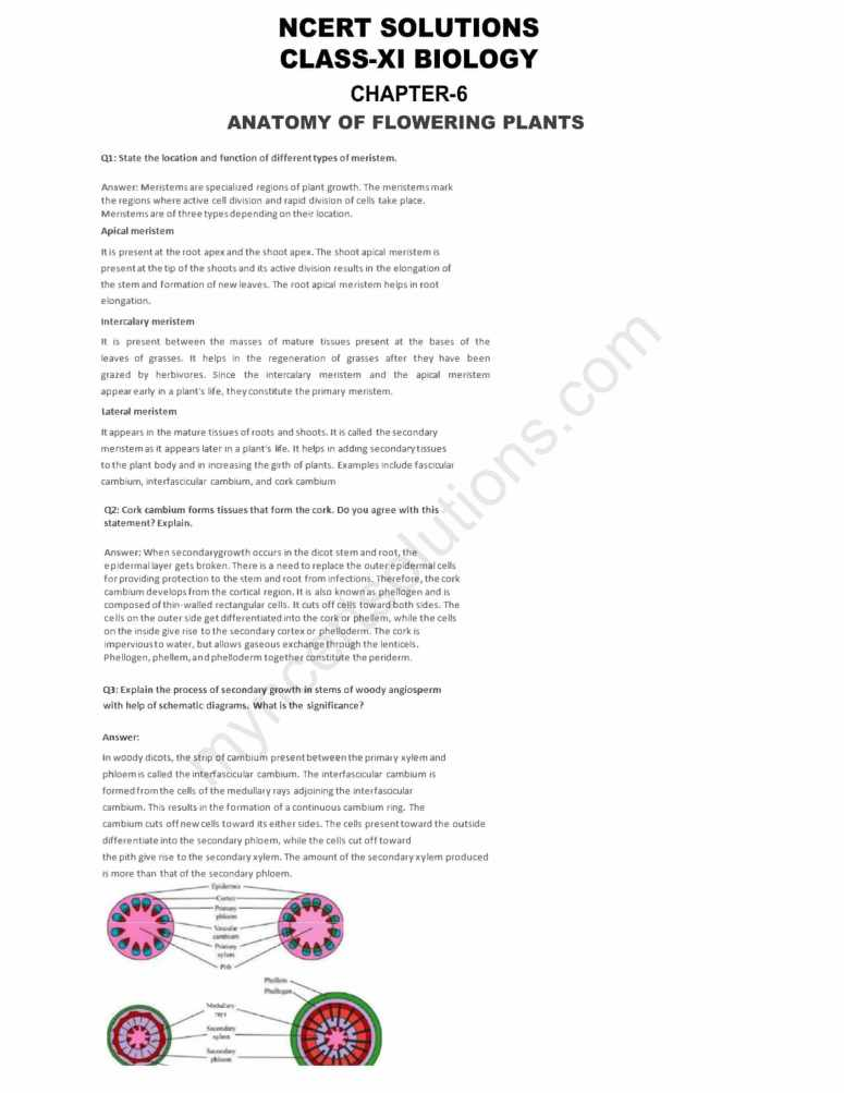 NCERT Solutions For Class 11 Biology Chapter 6 Anatomy Of Flowering ...