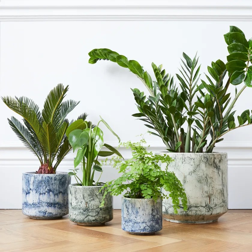 Extra Large Indoor Plant Pots Delivered In London Patch