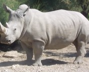 5 reasons to get excited about the rhinoceros room