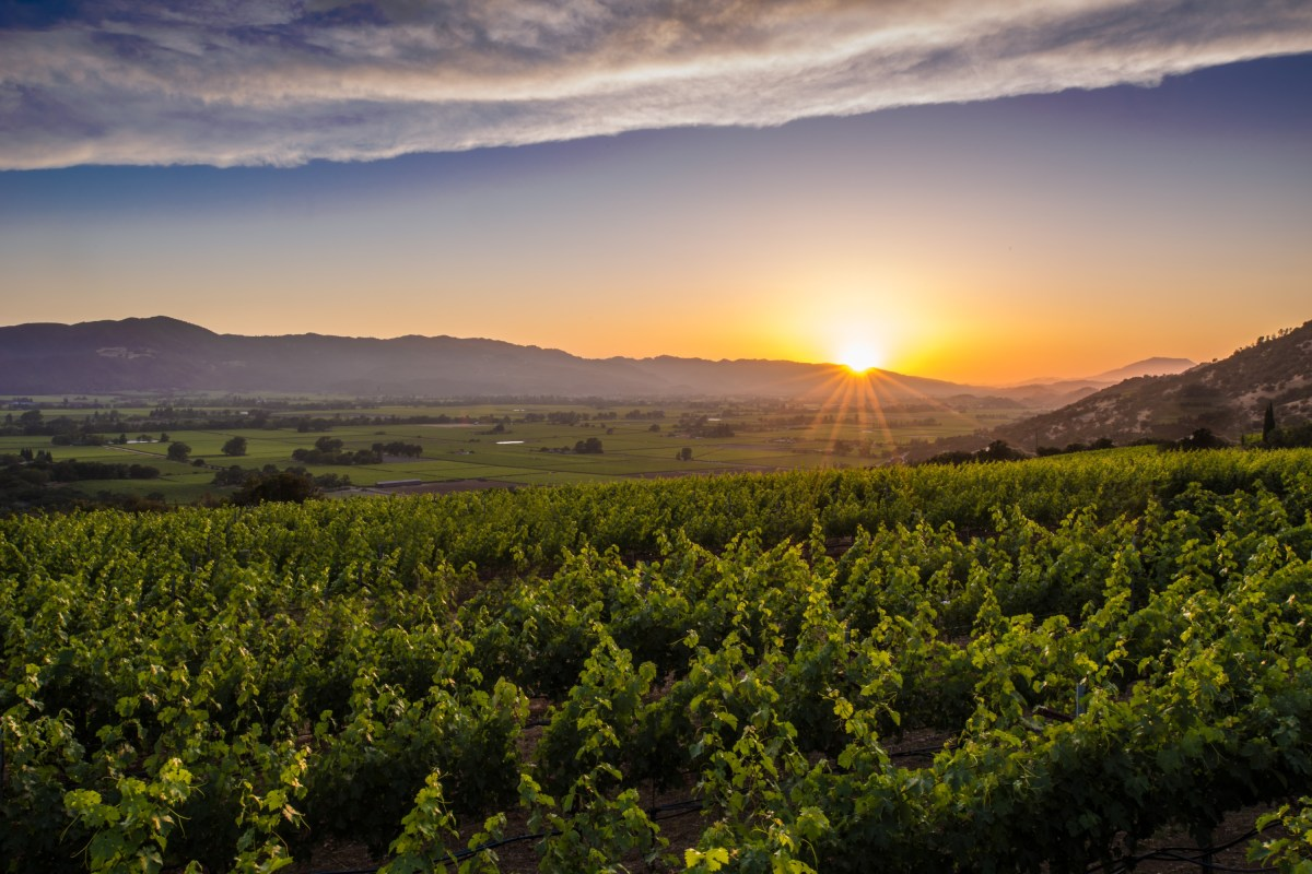 Visit Napa Valley | Wineries, Hotels, Events & Restaurants