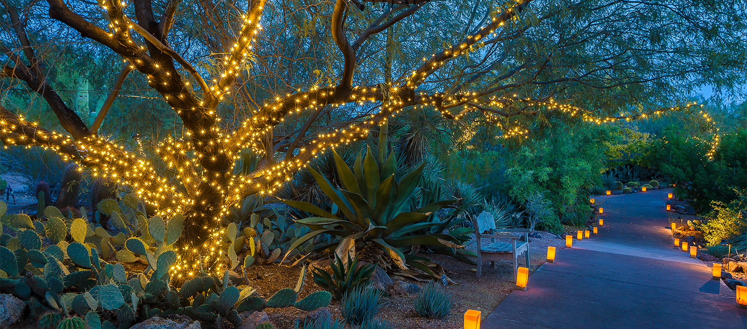 https www experiencescottsdale com stories post holiday lights in scottsdale