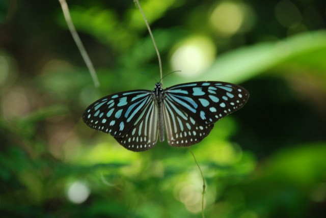 Il y a aussi de très jolis papillons :D