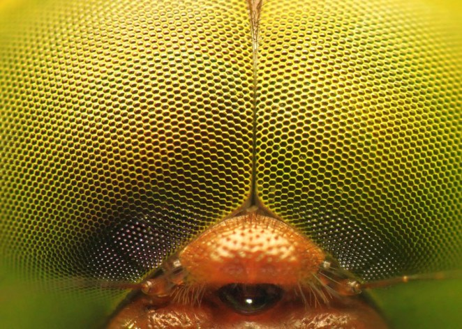 Woooahh!!! This is Extreme Close-up Photography - Sublime99