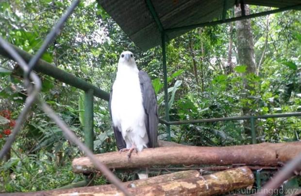 2016 05 pec eagle
