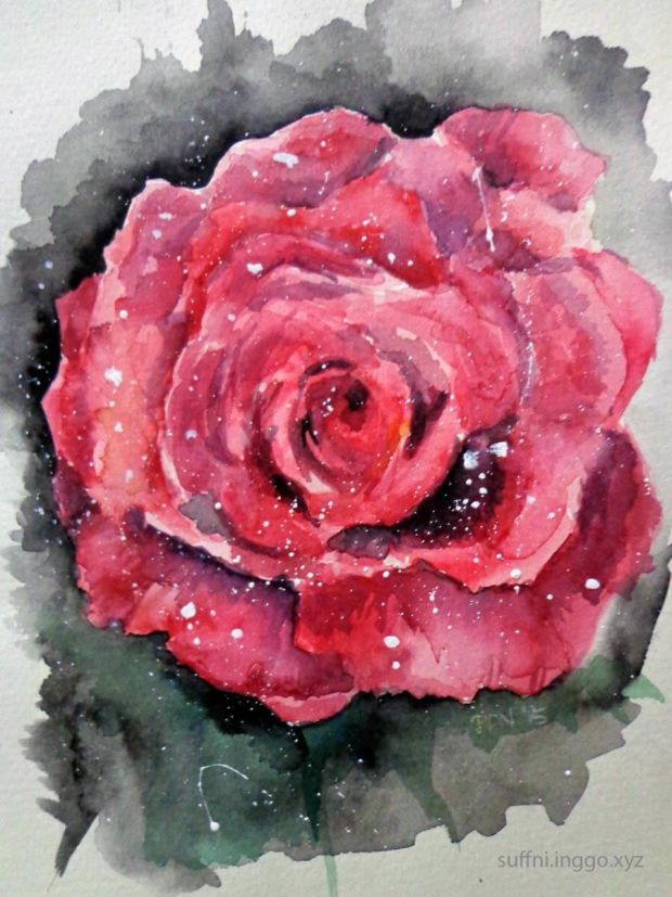 2016 03 rose