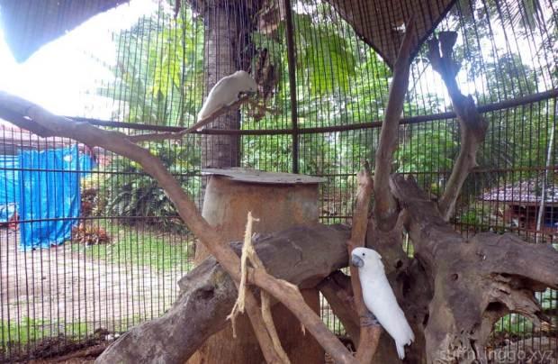 2016 05 malagos birds 3
