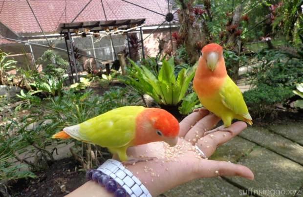 2016 05 malagos birds 2