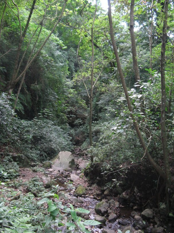 Lush Maderas trail to the waterfall