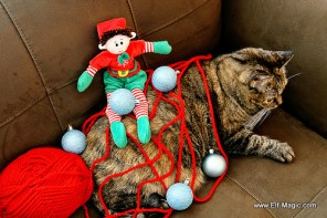 An Elf decorated Grumpy Cat