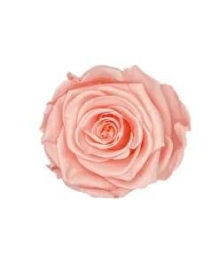 Infinity Rose Pink