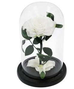 Glass Dome Weiß