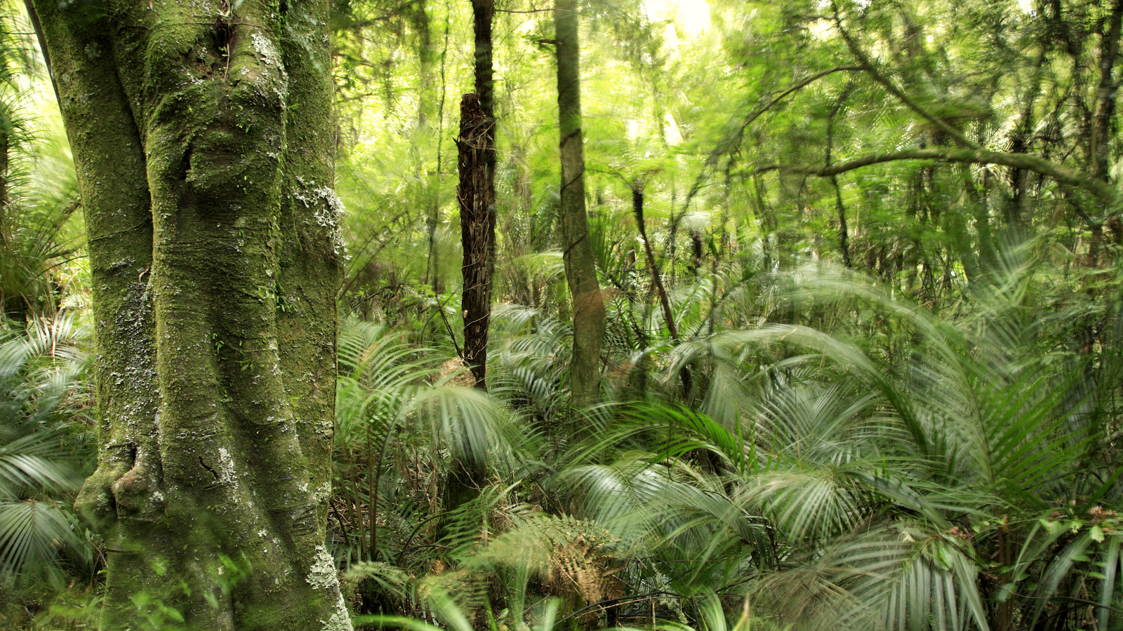 Amazon Rainforest Worksheet