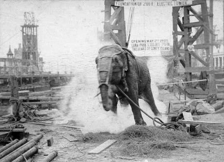 Topsy the circus elephant, electrocuted in 1903 because she killed a circus spectator