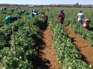 Investing HEAVILY On Agriculture to REDUCE Poverty
