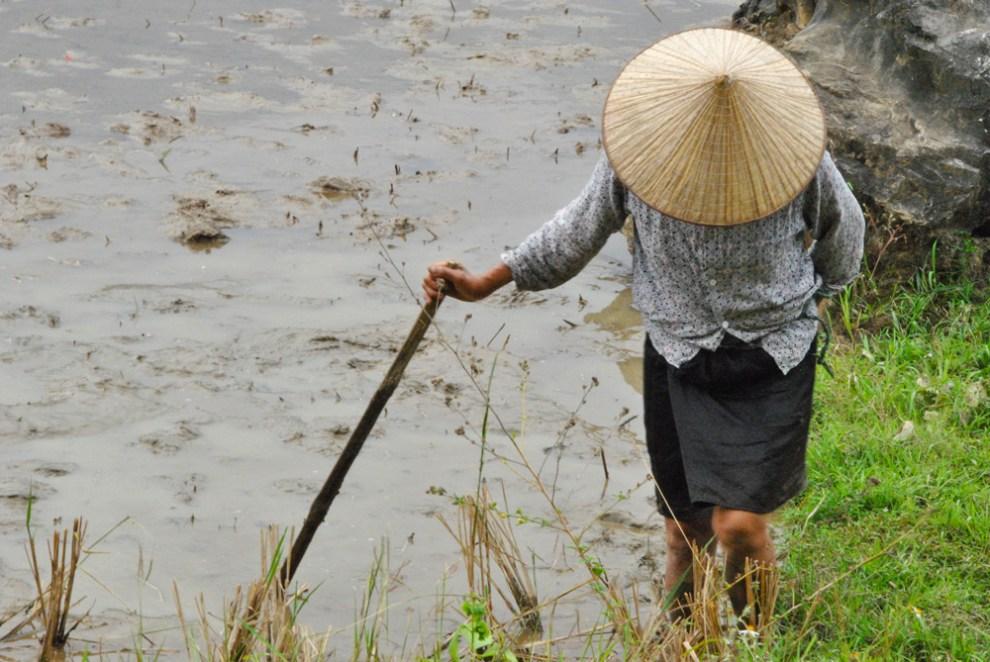 Lavoratrice nelle risaie di Mai Chau