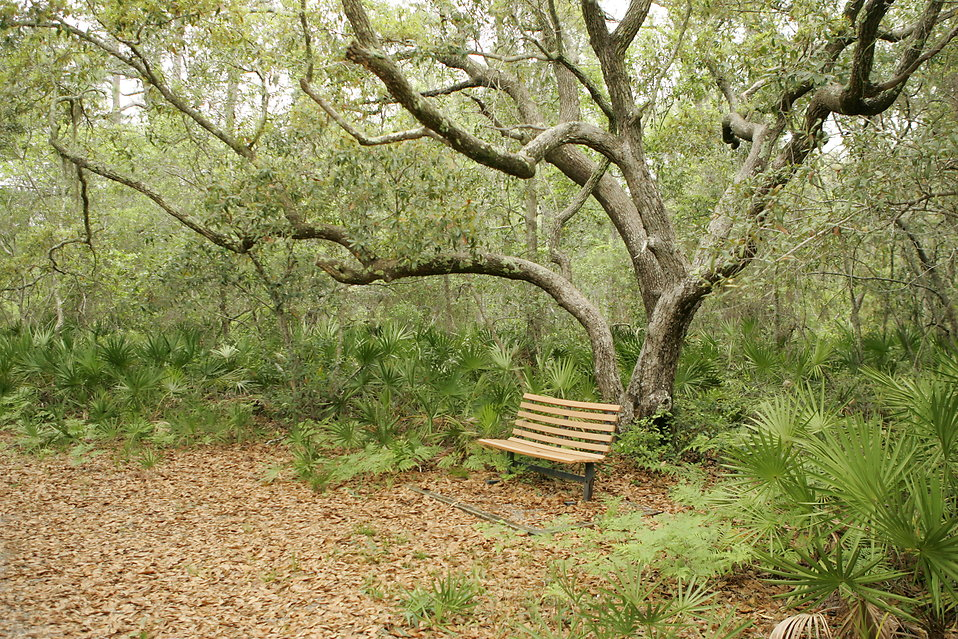 Bench Free Stock Photo A Bench On A Trail In The Woods 17275