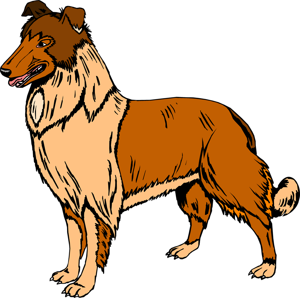 Collie | Free Stock Photo | Illustration of a collie dog ... (958 x 952 Pixel)