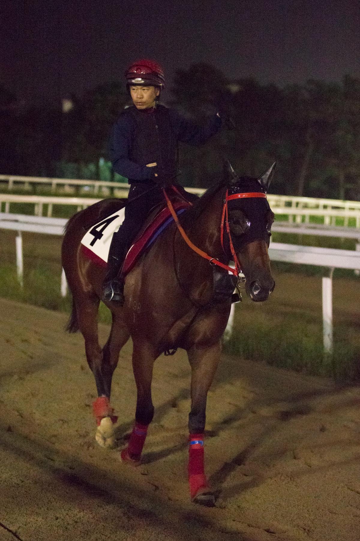 「縱橫大地」與「永旺年年」在首爾賽事中抽得好檔 – 賽馬新聞 – 香港賽馬會