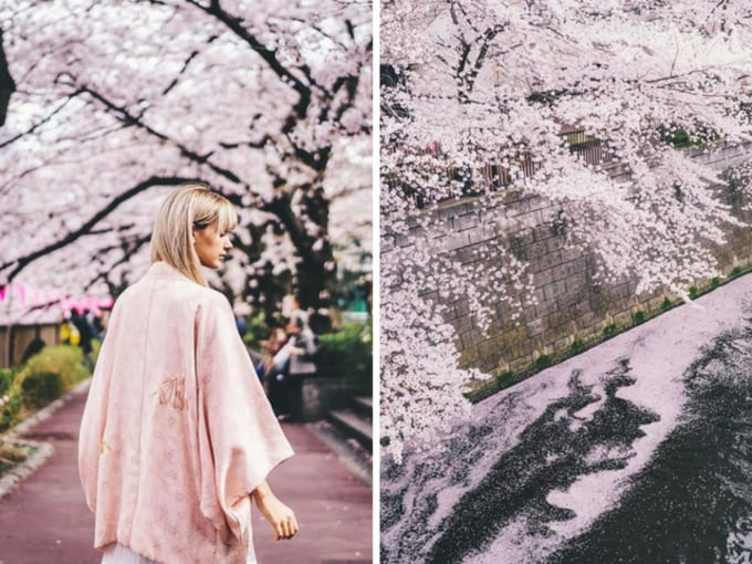 sông meguro là địa điểm ngắm hoa anh đào nổi tiếng