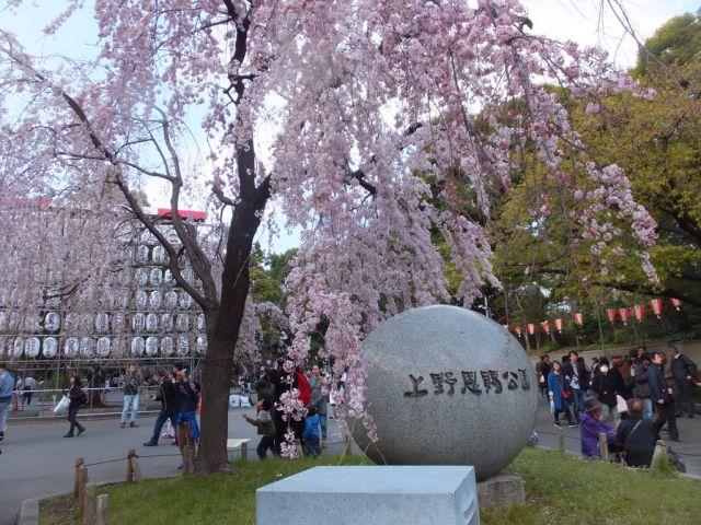 櫻花盛開的上野恩賜公園。(來源:4travel.jp)