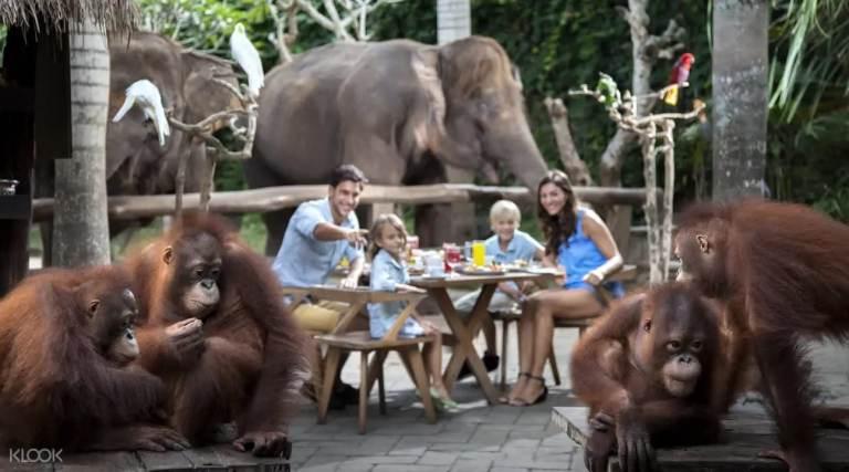 Những hoạt động thú vị tại Bali thích hợp cho gia đình có trẻ nhỏ!!!  nhung hoat dong thu vi tai bali thich hop cho gia dinh co tre nho13