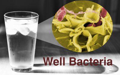 Coliform bacteria, cryptosporidium, giardia lamblia, E.coli