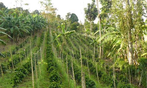 Colombia Single Origin Coffee