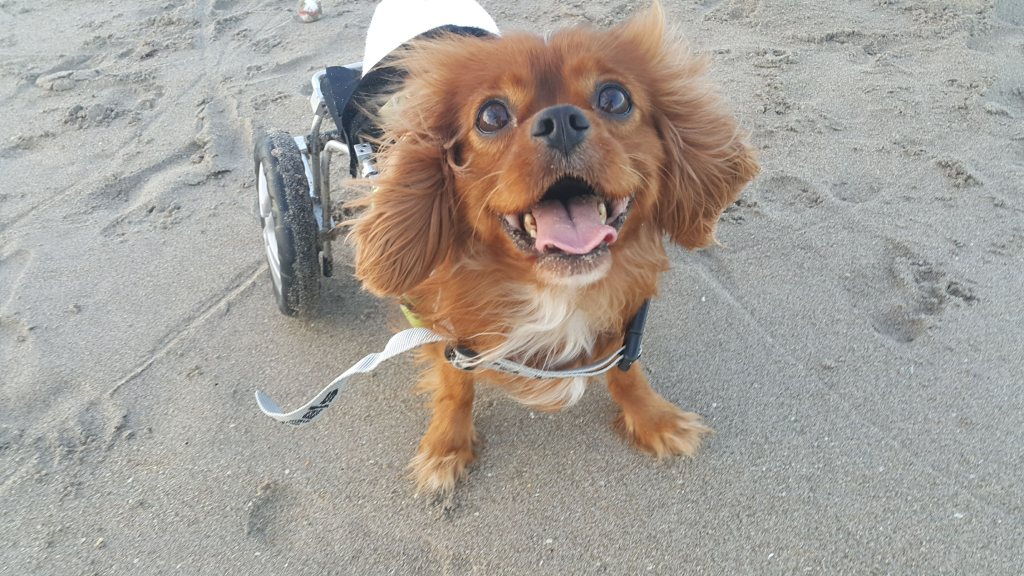 Winston never lets his disability slow him down