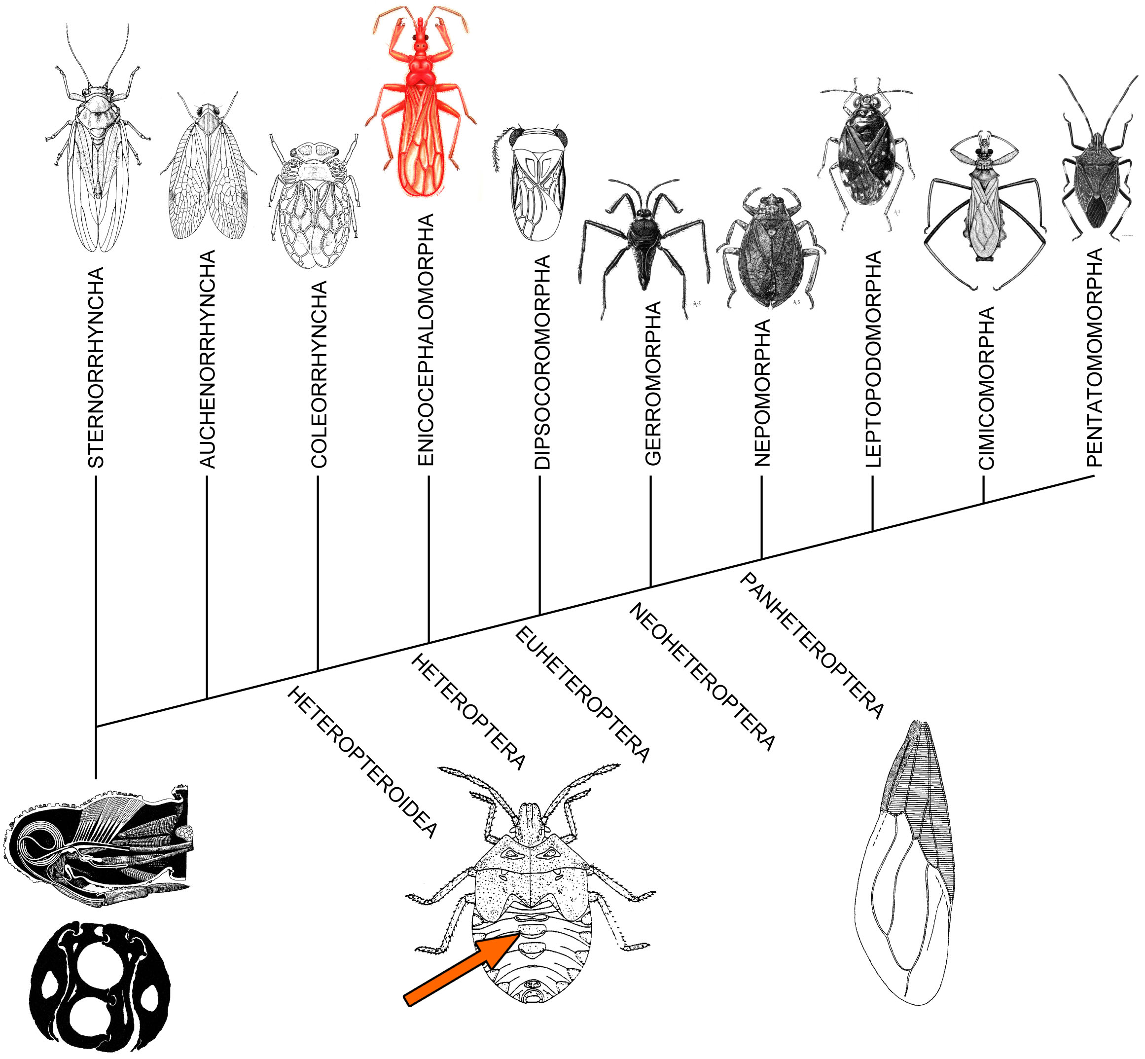 Plant Bug Planetary Biodiversity Inventory