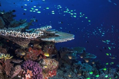 Photograph of a healthy coral reef slope
