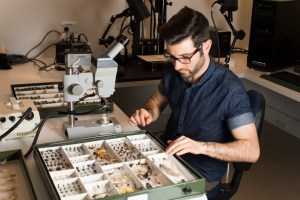 A young man siting at a bench with a drawer of insect specimens in front of him and a microscope to his left.