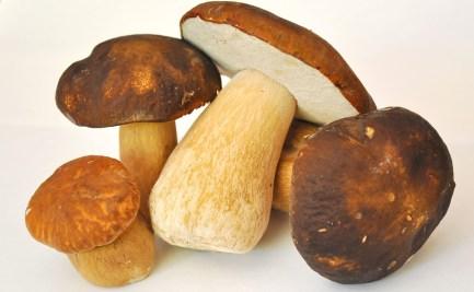 Porcini mushroom