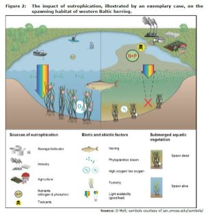 Figure 2: The impact of eutrophication, illustrated by an exemplary case, on the spawning habitat of western Baltic herring.