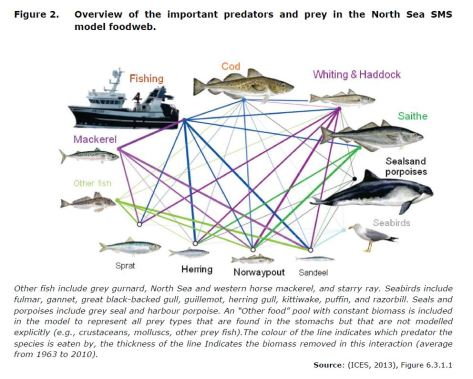 Figure 2. Overview of the important predators and prey in the North Sea SMS model foodweb.