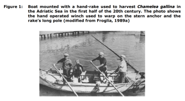 Figure 1: Boat mounted with a hand-rake used to harvest Chamelea gallina in the Adriatic Sea in the first half of the 20th century. The photo shows the hand operated winch used to warp on the stern anchor and the rake's long pole (modified from Froglia, 1989a)