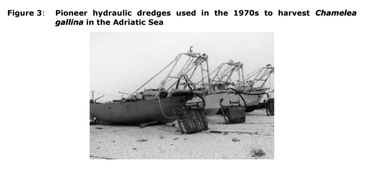 Figure 3: Pioneer hydraulic dredges used in the 1970s to harvest Chamelea gallina in the Adriatic Sea