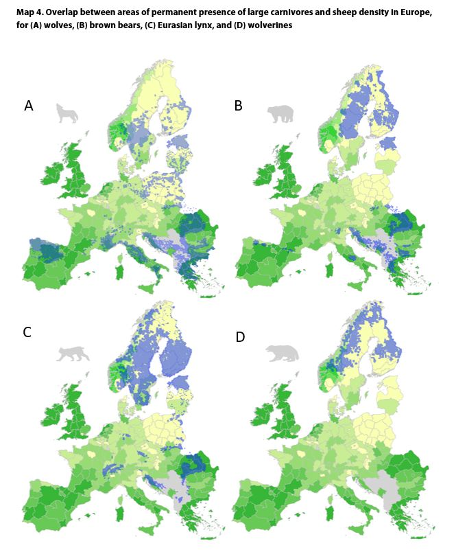 Map 4. Overlap between areas of permanent presence of large carnivores and sheep density in Europe, for (A) wolves, (B) brown bears, (C) Eurasian lynx, and (D) wolverines