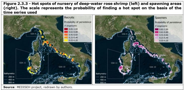 Figure 2.3.3 - Hot spots of nursery of deep-water rose shrimp (left) and spawning areas (right). The scale represents the probability of finding a hot spot on the basis of the time series used