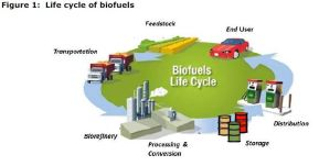 Figure 1: Life cycle of biofuels