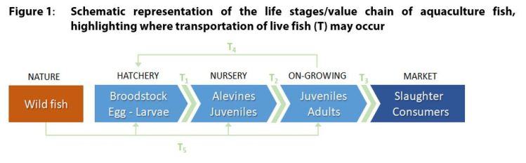 Figure 1: Schematic representation of the life stages/value chain of aquaculture fish, highlighting where transportation of live fish (T) may occur